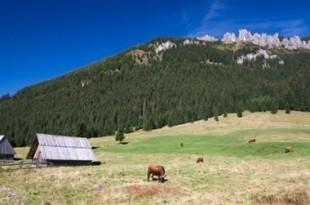pericoli agricoltura e diossina