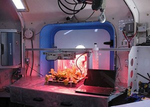 esperimento semina lattuga spaziale
