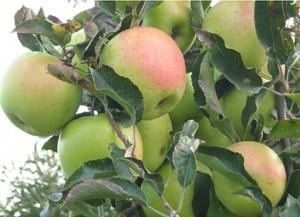 i vantaggi degli alimenti biologici