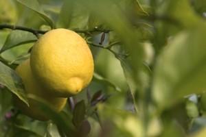 limoni carburante futuro