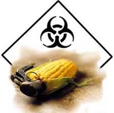pericoli ogm in commercio