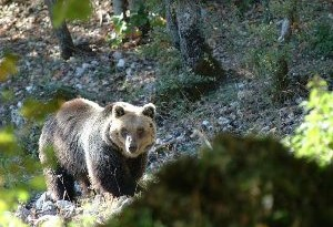 Animali parco nazionale d'Abruzzo