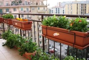piante aromatiche balcone