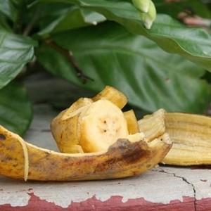 usare bucce di banana per cura giardino