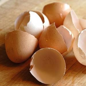 riciclo dei gusci d'uovo