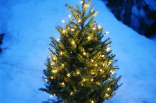 albero ecologico