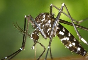 trappola artigianale per zanzare