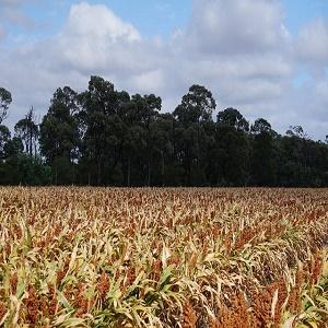caminetti ecologici a bioetanolo